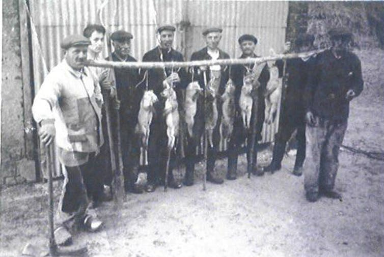 Chasseurs de renards en France dans les années1950.